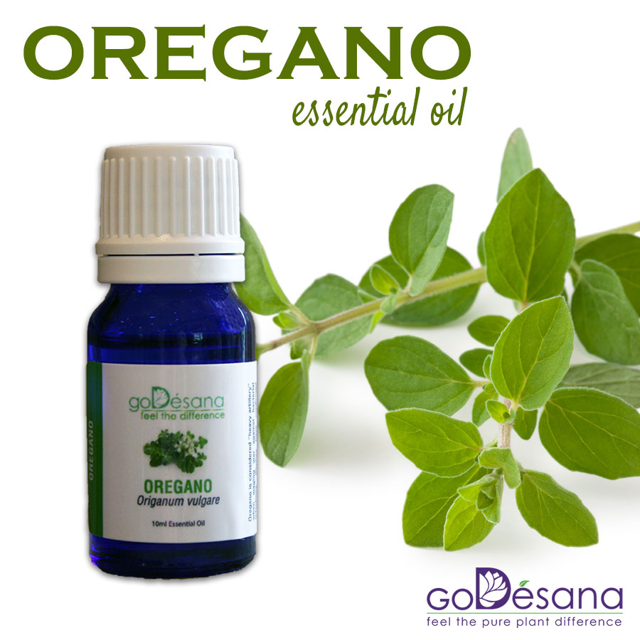 Oregano Daily Deal
