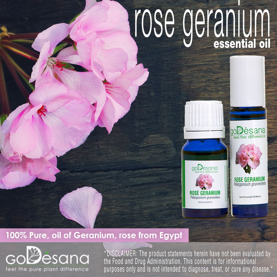 Geranium rose essential oil god sana a green organics international company - Rose essential oil business ...
